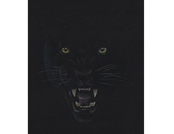 Black Panther Portrait Head