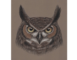 Special Drawing Great Horned Owl Head Portrait