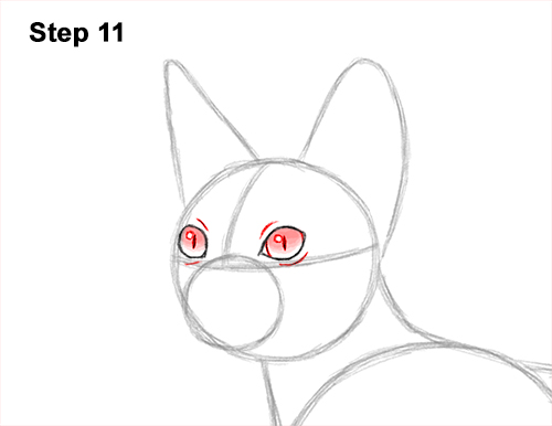 How to Draw a Sphynx Hairless Cat 11