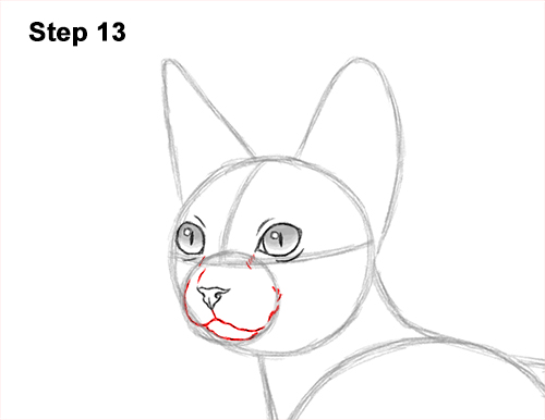 How to Draw a Sphynx Hairless Cat 13