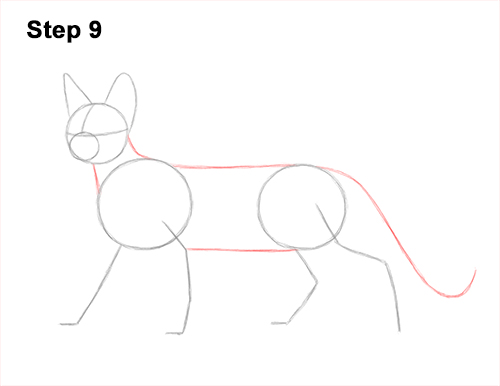 How to Draw a Sphynx Hairless Cat 9