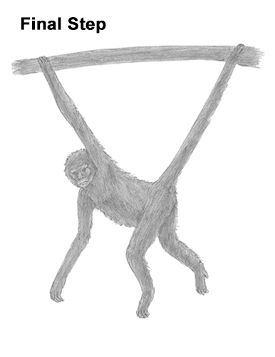 Draw Spider Monkey Last