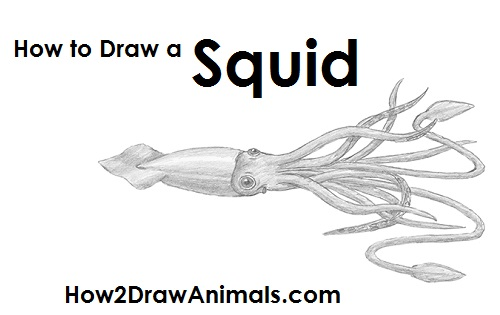 Draw Squid