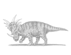 How to Draw a styracosaurus