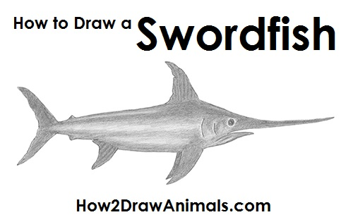 Draw Swordfish
