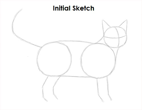 Draw Tabby Cat Sketch