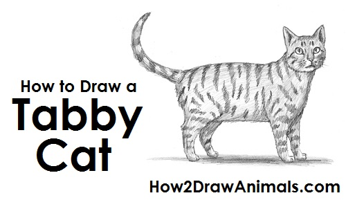 Draw Tabby Cat