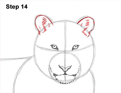 How to Draw a Tiger Laying Lying Down 14