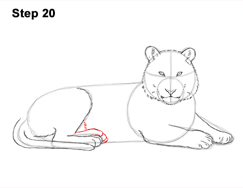 How to Draw a Tiger Laying Lying Down 20