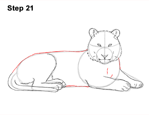 How to Draw a Tiger Laying Lying Down 21