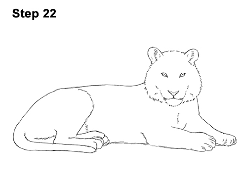 How to Draw a Tiger Laying Lying Down 22