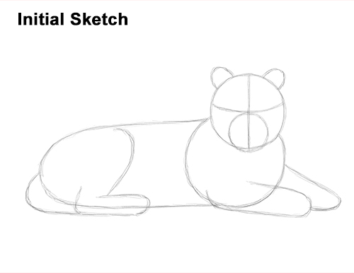 How to Draw a Tiger Laying Lying Down Guide Lines