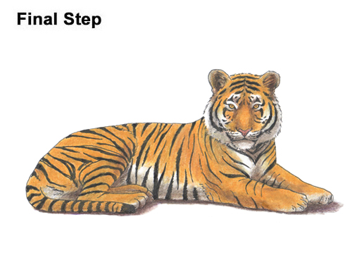 How to Draw a Tiger Laying Lying Down Color
