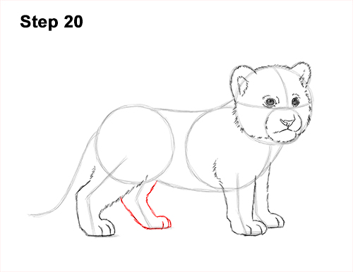 How to Draw a Cute Baby Tiger Cub 20