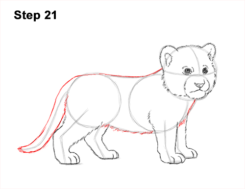 How to Draw a Cute Baby Tiger Cub 21