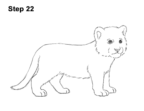 How to Draw a Cute Baby Tiger Cub 22