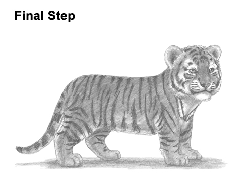 How to Draw a Cute Baby Tiger Cub