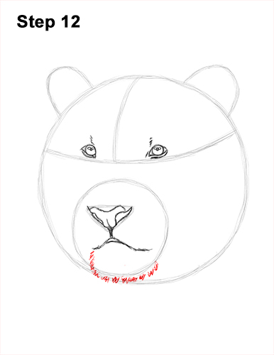 How to Draw a Tiger Head Portrait Face 12