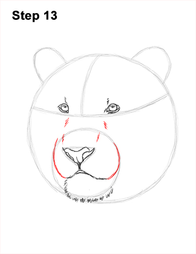 How to Draw a Tiger Head Portrait Face 13