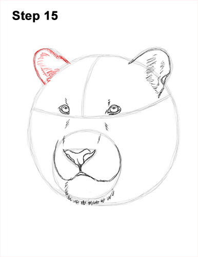 How to Draw a Tiger Head Portrait Face 15