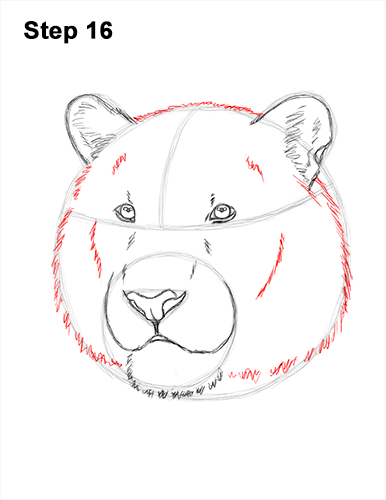 How to Draw a Tiger Head Portrait Face 16