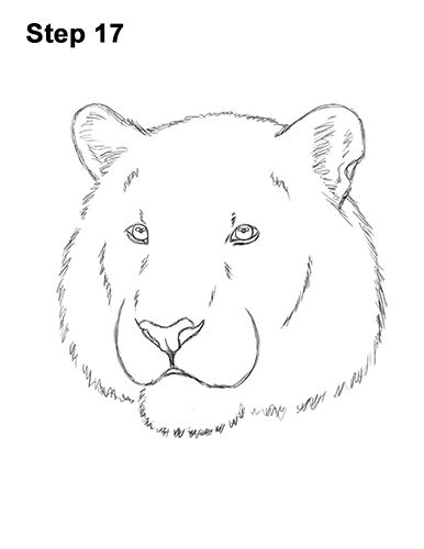 How to Draw a Tiger Head Portrait Face 17
