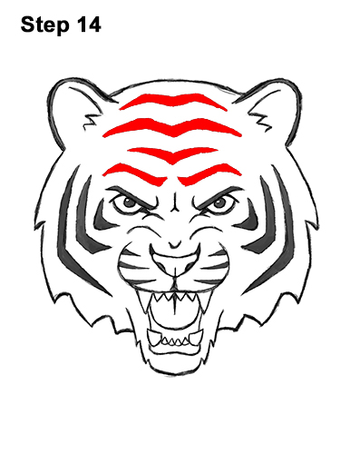 How to Draw Angry Roaring Cartoon Tiger Head 14