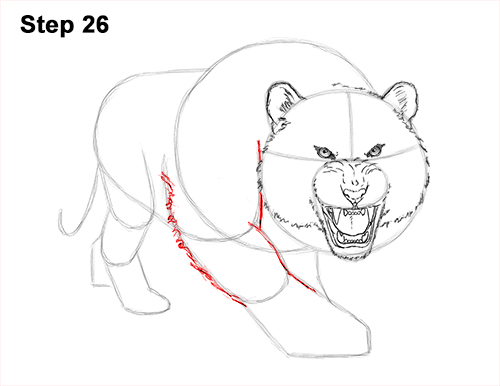 How to Draw a Mean Tiger Roaring Growling Stalking 26