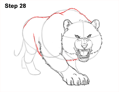 How to Draw a Mean Tiger Roaring Growling Stalking 28