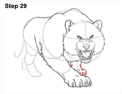 How to Draw a Mean Tiger Roaring Growling Stalking 29