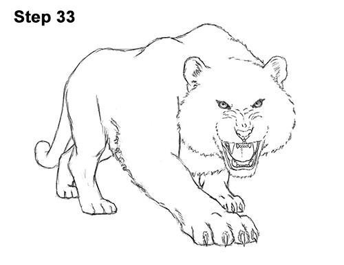 How to Draw a Mean Tiger Roaring Growling Stalking 33