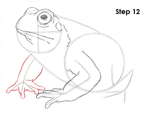 Draw Toad 12