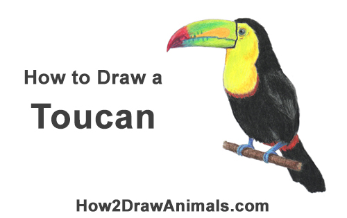 How to Draw a Toucan Bird