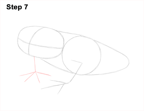 How to Draw a Red-Eyed Tree Frog 7