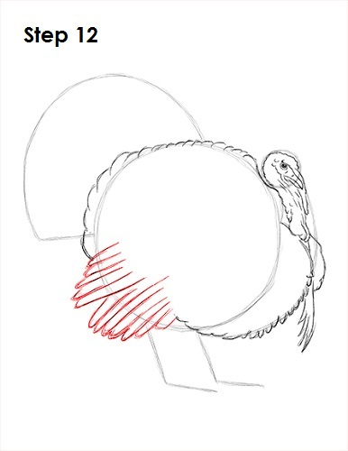 Draw a Turkey 12