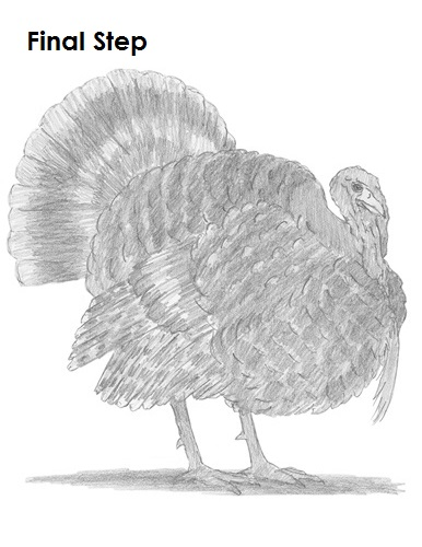 Turkey Drawing Completed
