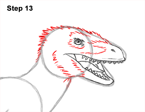 How to Draw Accurate Feathered Velociraptor 13