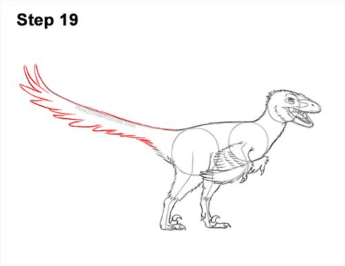 How to Draw Accurate Feathered Velociraptor 19