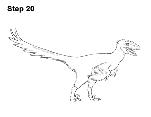 How to Draw Accurate Feathered Velociraptor 20