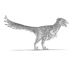 How to Draw an Accurate Velociraptor with Feathers