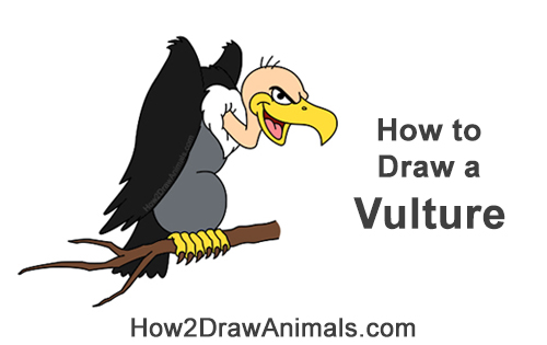 How to Draw a Cool Cartoon Vulture Condor Buzzard