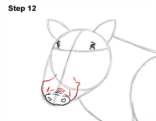 How to Draw a Common Warthog Pig 12