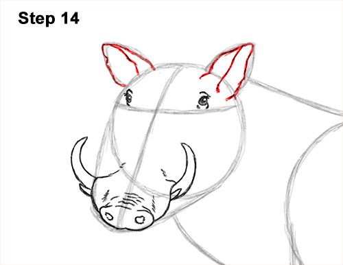 How to Draw a Common Warthog Pig 14