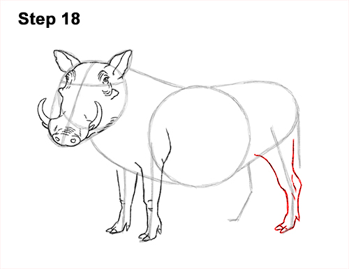 How to Draw a Common Warthog Pig 18
