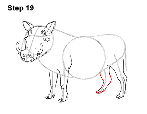 How to Draw a Common Warthog Pig 19