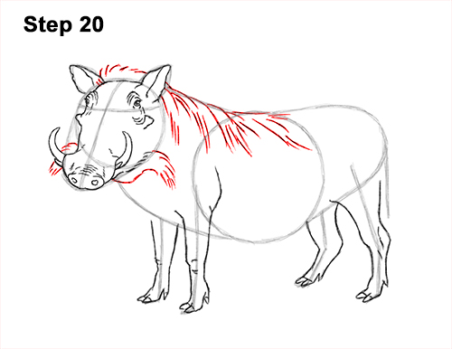 How to Draw a Common Warthog Pig 20