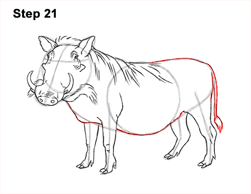 How to Draw a Common Warthog Pig 21