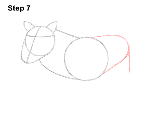 How to Draw a Common Warthog Pig 7