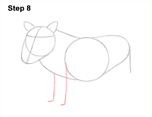 How to Draw a Common Warthog Pig 8