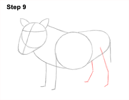 How to Draw a Common Warthog Pig 9